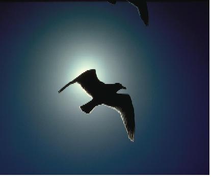 O paxariño