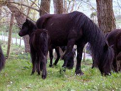 Os ponis