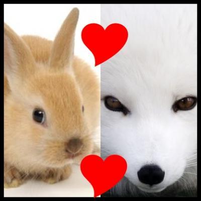 Os amores da raposa.